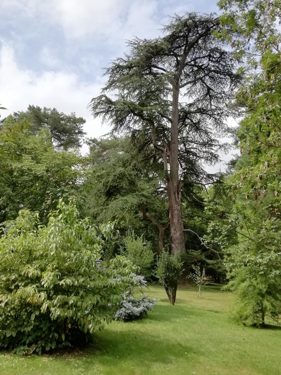 TARBES-Jardin-Massey-2